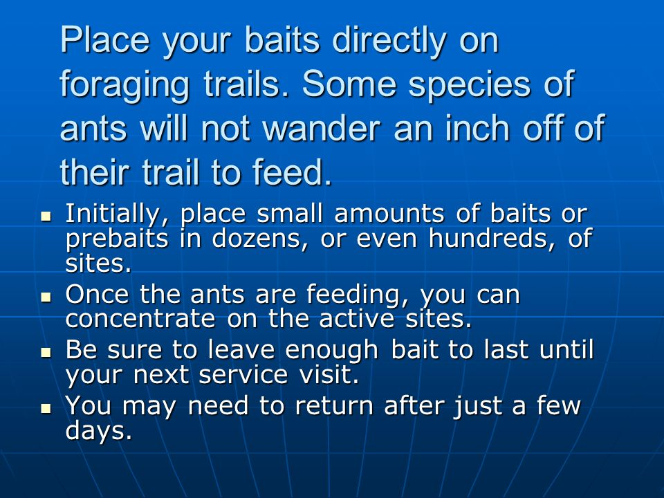 Place your baits directly on foraging trails