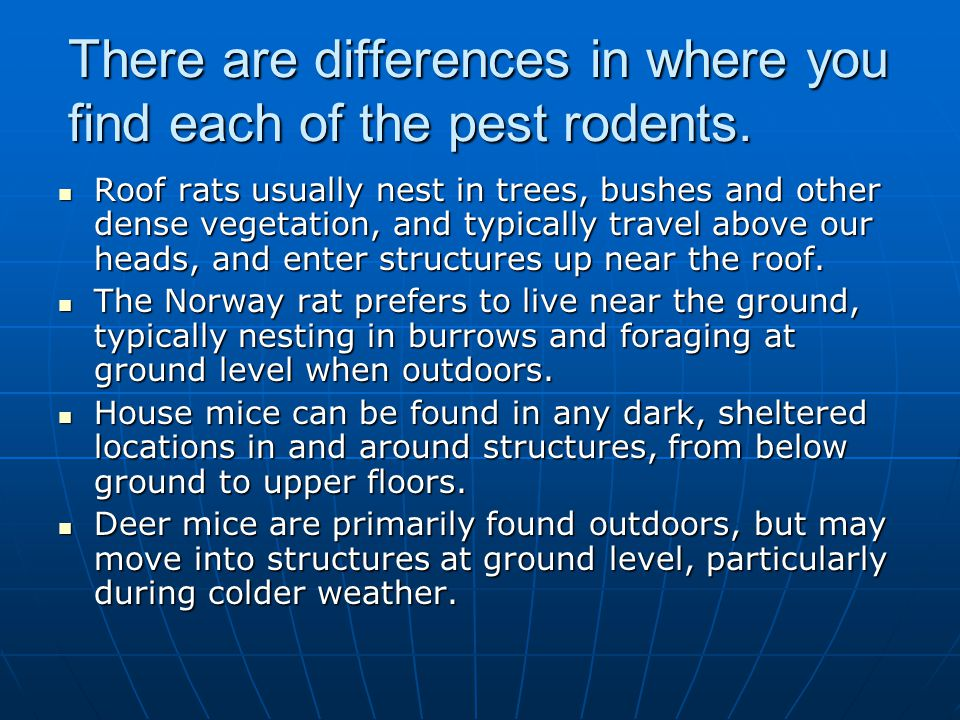 There are differences in where you find each of the pest rodents.