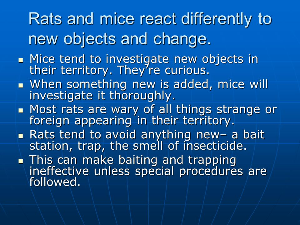 Rats and mice react differently to new objects and change.