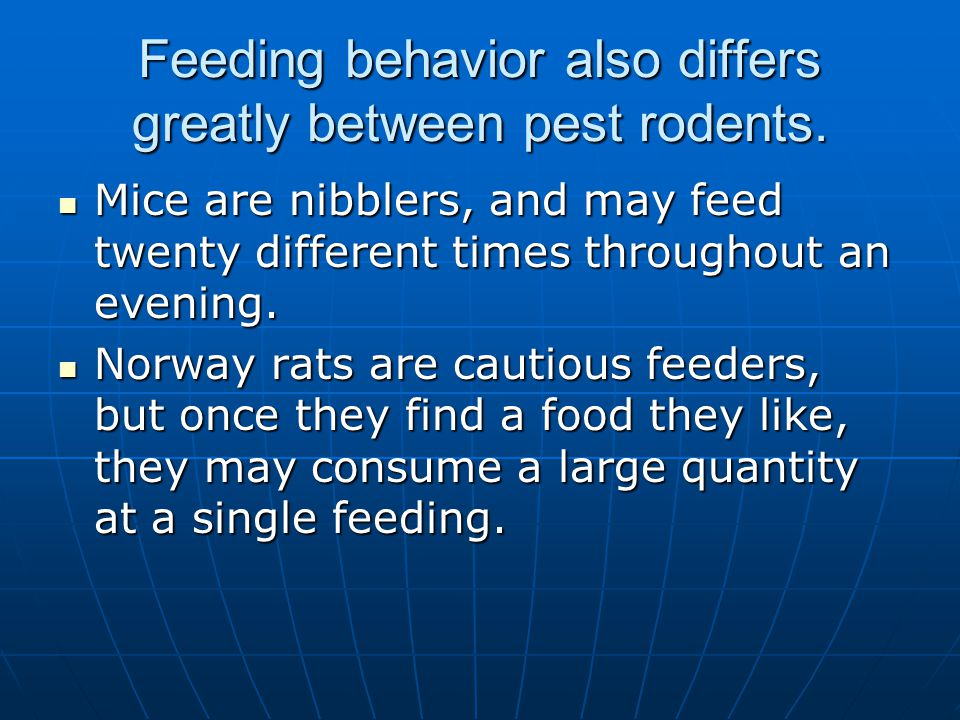 Feeding behavior also differs greatly between pest rodents.