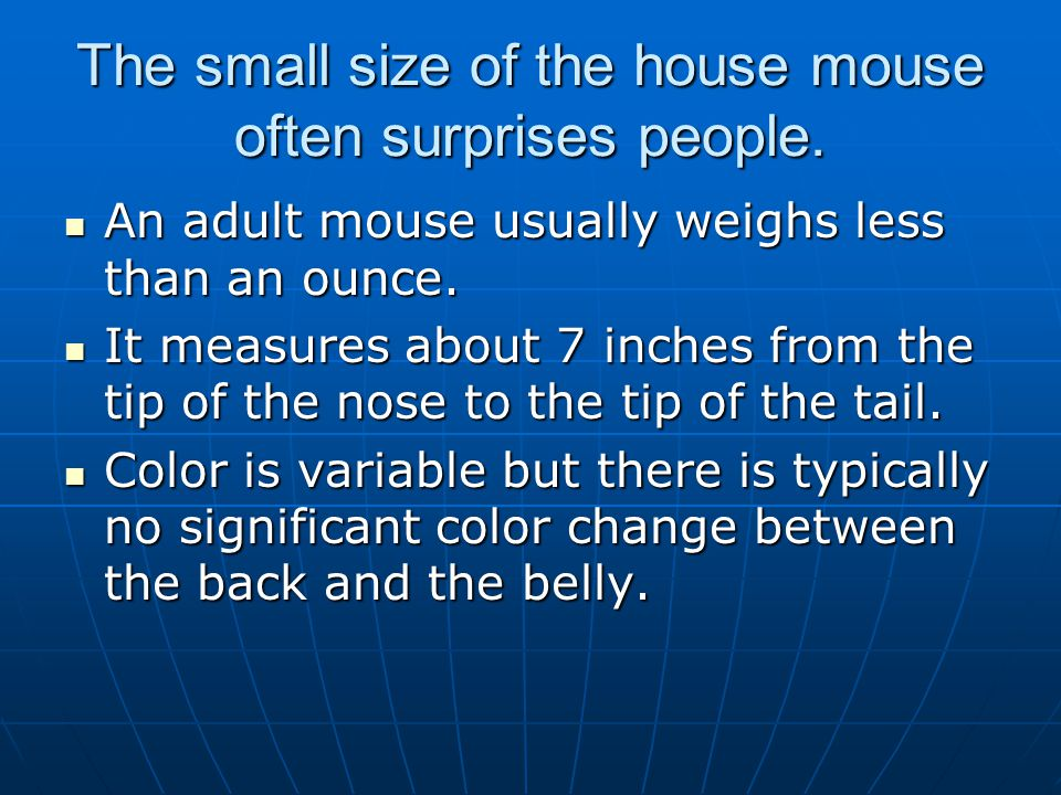 The small size of the house mouse often surprises people.