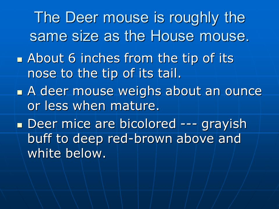 The Deer mouse is roughly the same size as the House mouse.