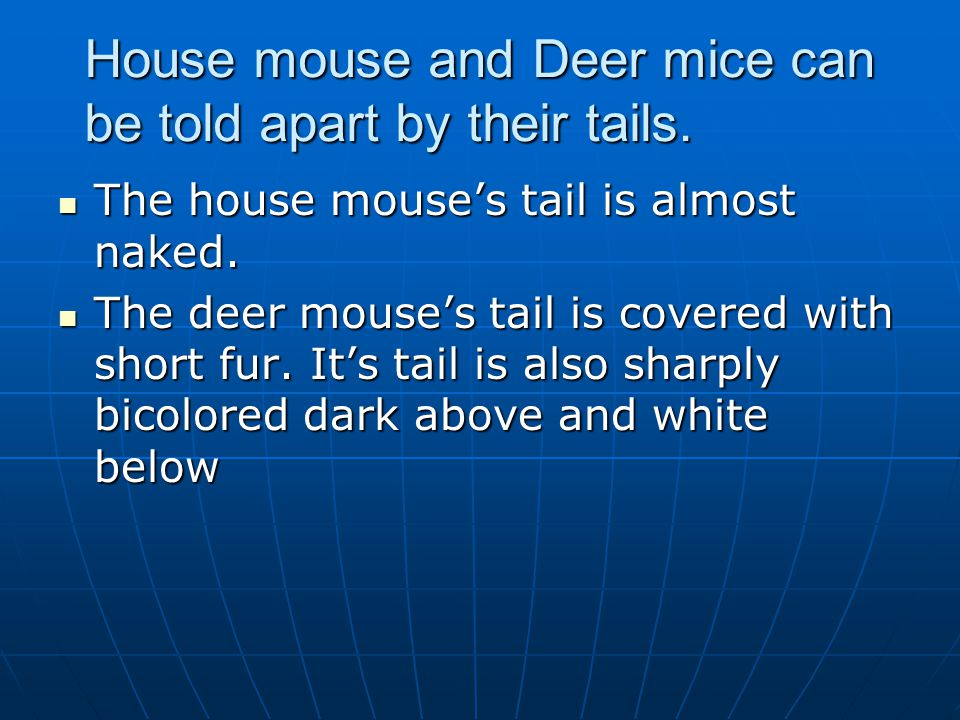 House mouse and Deer mice can be told apart by their tails.