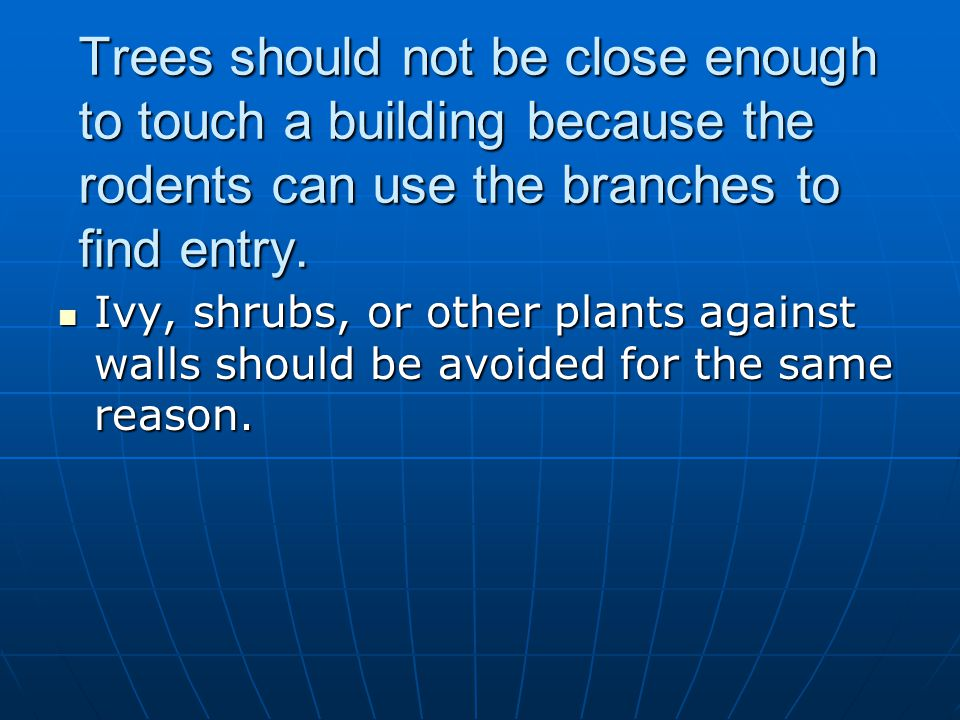 Trees should not be close enough to touch a building because the rodents can use the branches to find entry.