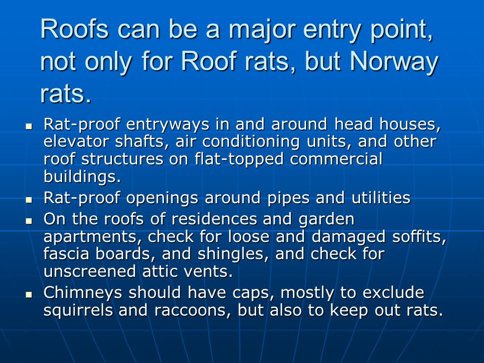 Roofs can be a major entry point, not only for Roof rats, but Norway rats.