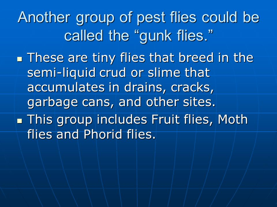 Another group of pest flies could be called the gunk flies.