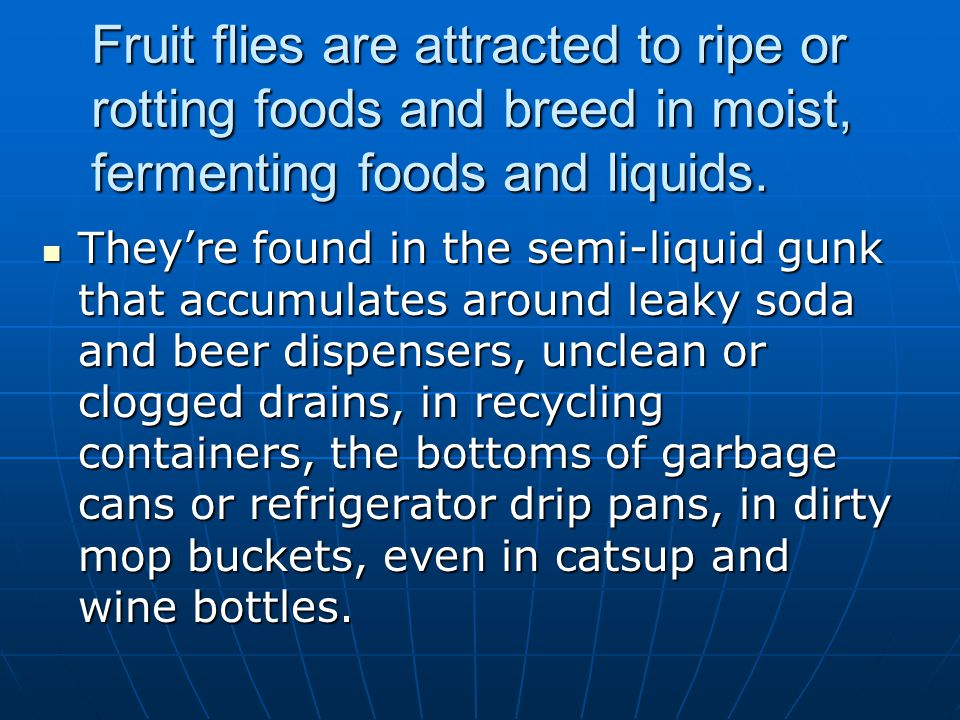 Fruit flies are attracted to ripe or rotting foods and breed in moist, fermenting foods and liquids.