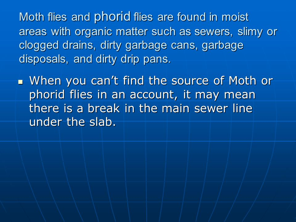 Moth flies and phorid flies are found in moist areas with organic matter such as sewers, slimy or clogged drains, dirty garbage cans, garbage disposals, and dirty drip pans.