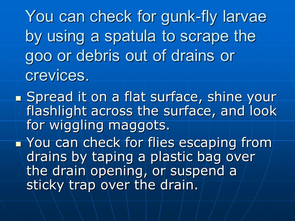 You can check for gunk-fly larvae by using a spatula to scrape the goo or debris out of drains or crevices.