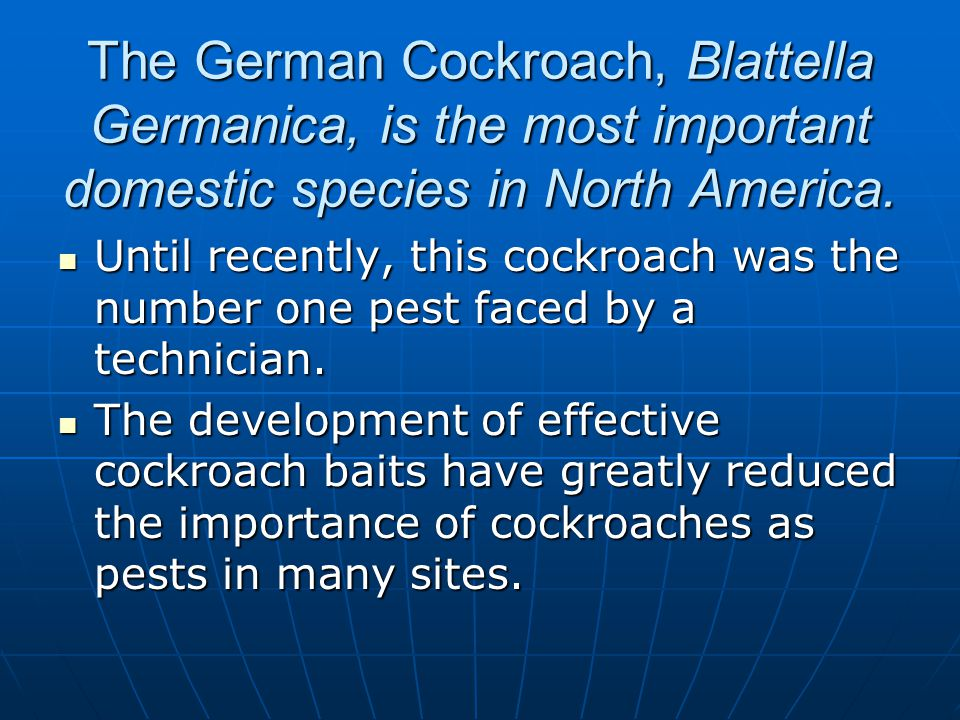 The German Cockroach, Blattella Germanica, is the most important domestic species in North America.