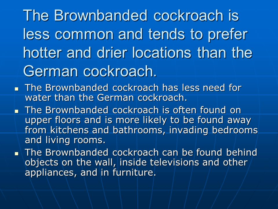 The Brownbanded cockroach is less common and tends to prefer hotter and drier locations than the German cockroach.