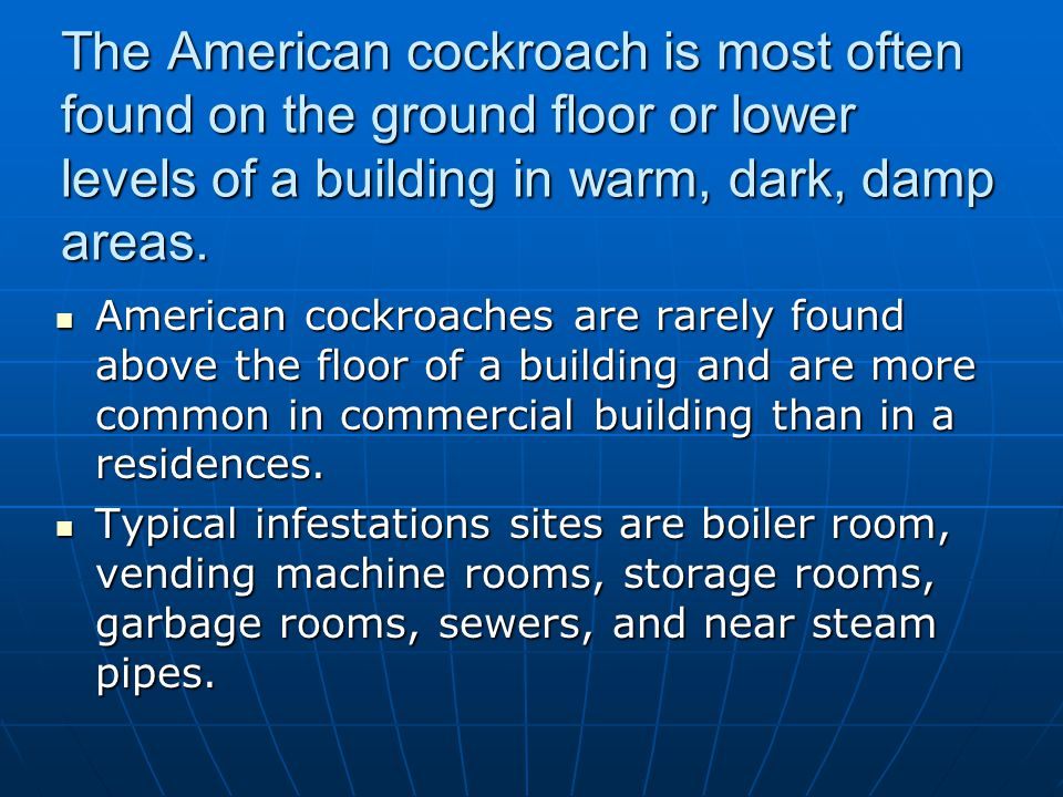 The American cockroach is most often found on the ground floor or lower levels of a building in warm, dark, damp areas.