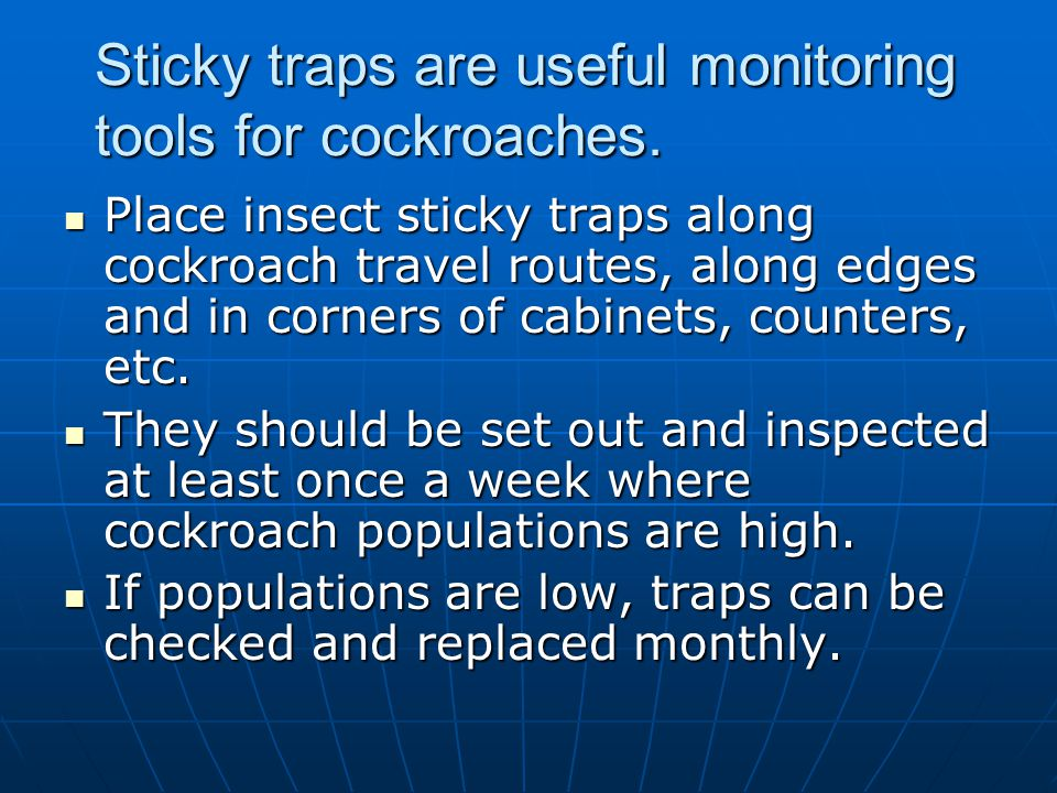 Sticky traps are useful monitoring tools for cockroaches.