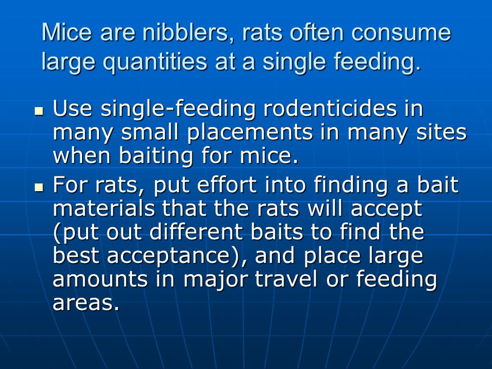 Mice are nibblers, rats often consume large quantities at a single feeding.