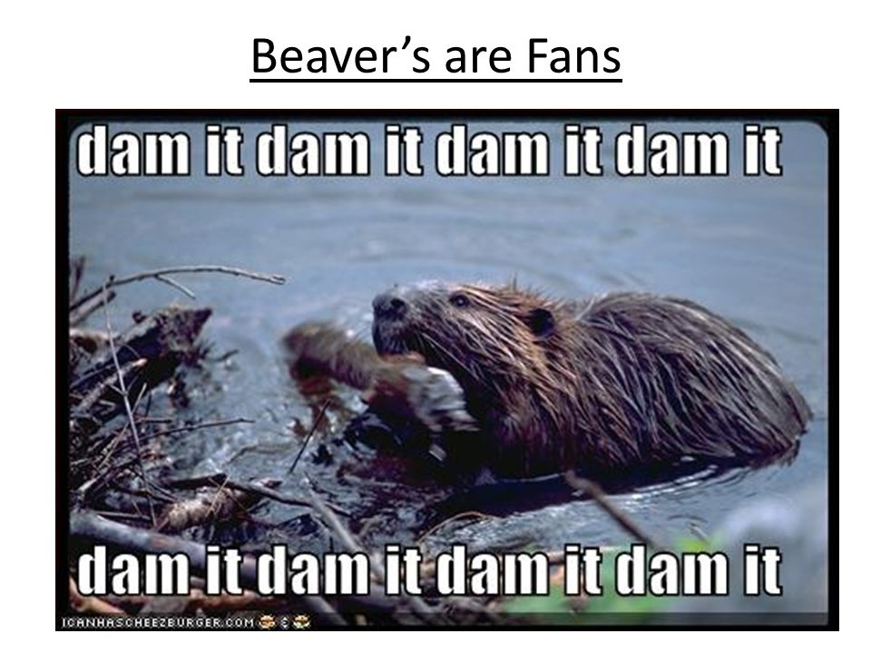 Beaver's are Fans