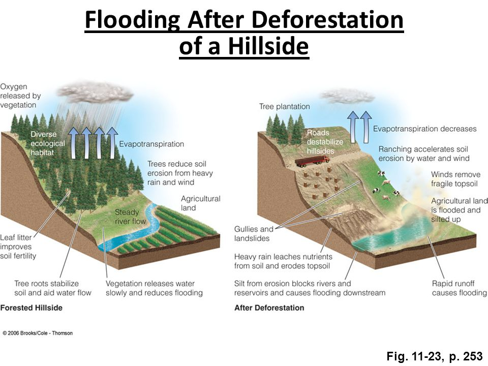 Flooding After Deforestation of a Hillside