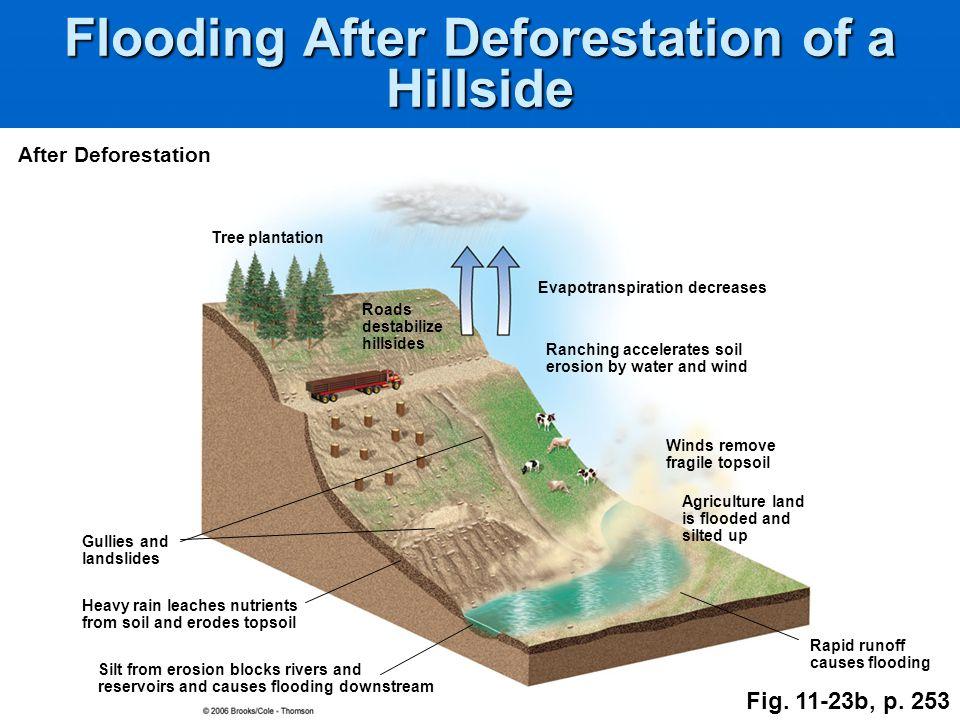 Flooding After Deforestation of a Hillside