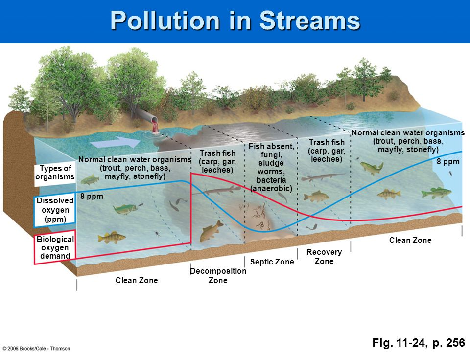 Pollution in Streams Fig. 11-24, p. 256 Normal clean water organisms