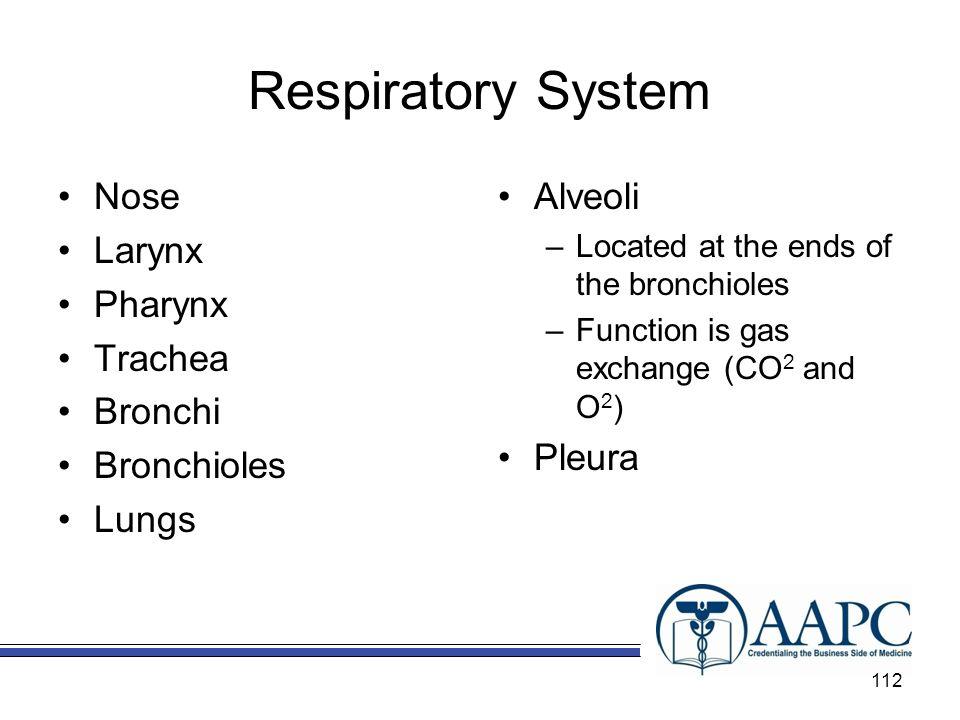 Respiratory System Nose Larynx Pharynx Trachea Bronchi Bronchioles
