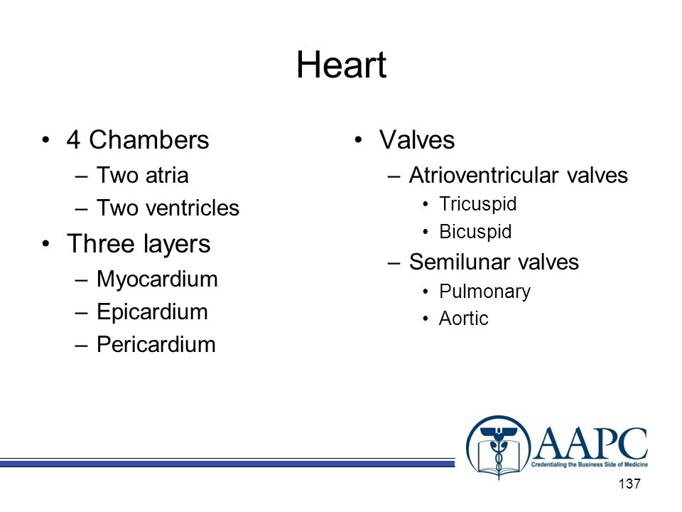 Heart 4 Chambers Three layers Valves Two atria Two ventricles