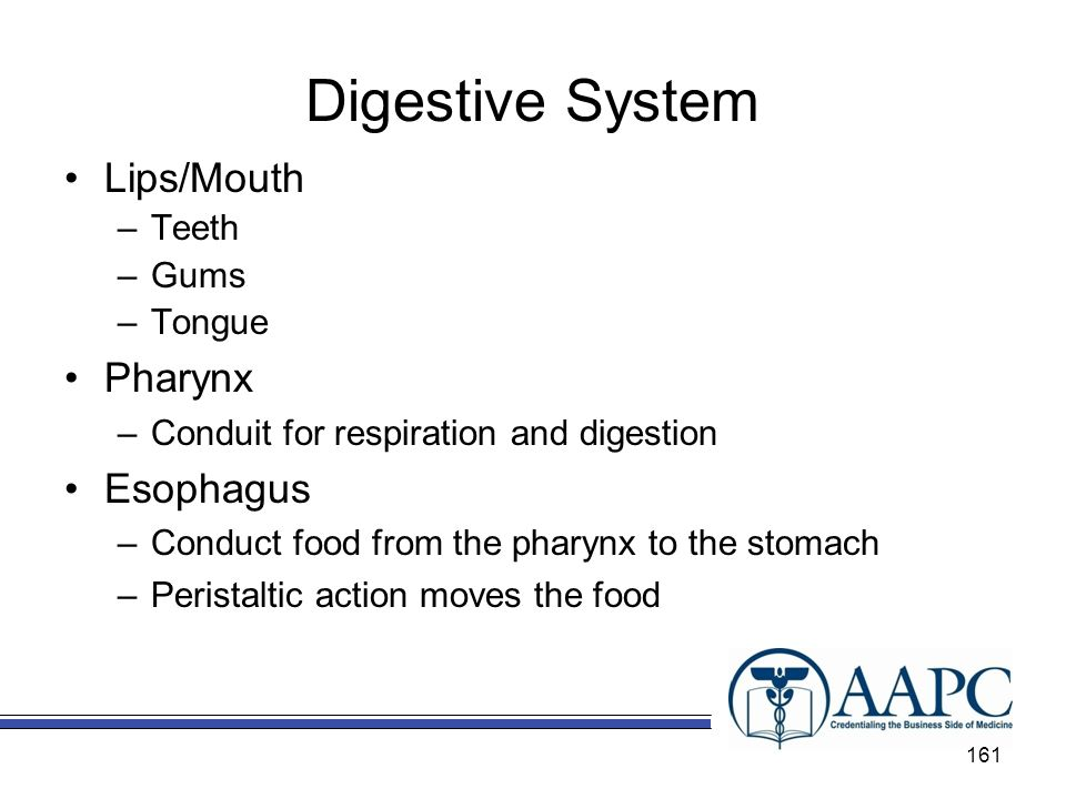 Digestive System Lips/Mouth Pharynx Esophagus Teeth Gums Tongue