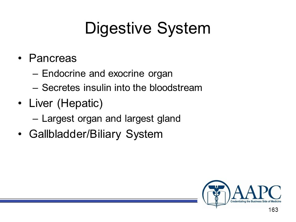 Digestive System Pancreas Liver (Hepatic) Gallbladder/Biliary System