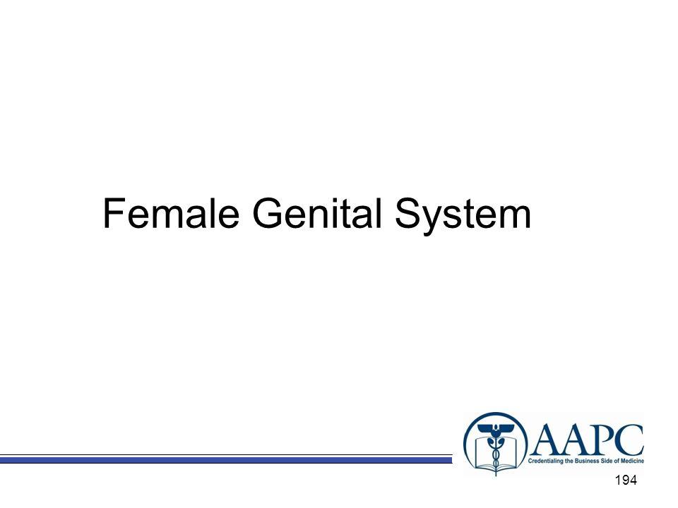 Female Genital System Chapter 11 – Female Genital System