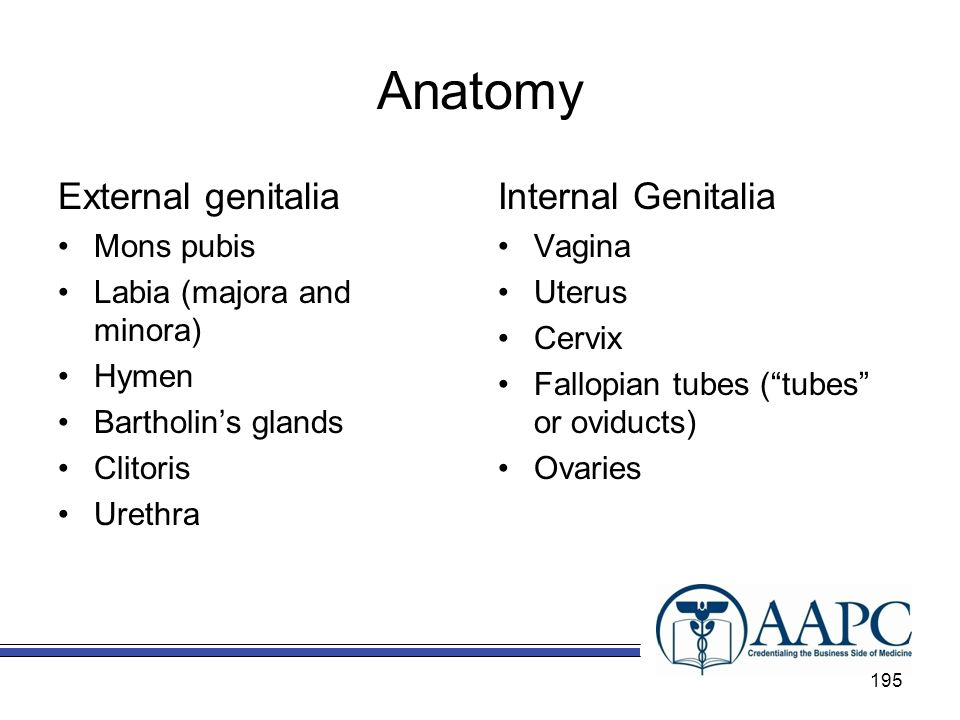 Anatomy External genitalia Internal Genitalia Mons pubis