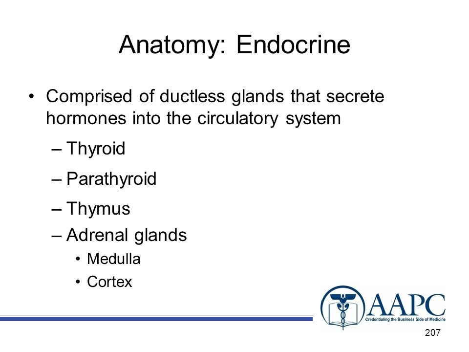 Anatomy: Endocrine Comprised of ductless glands that secrete hormones into the circulatory system.
