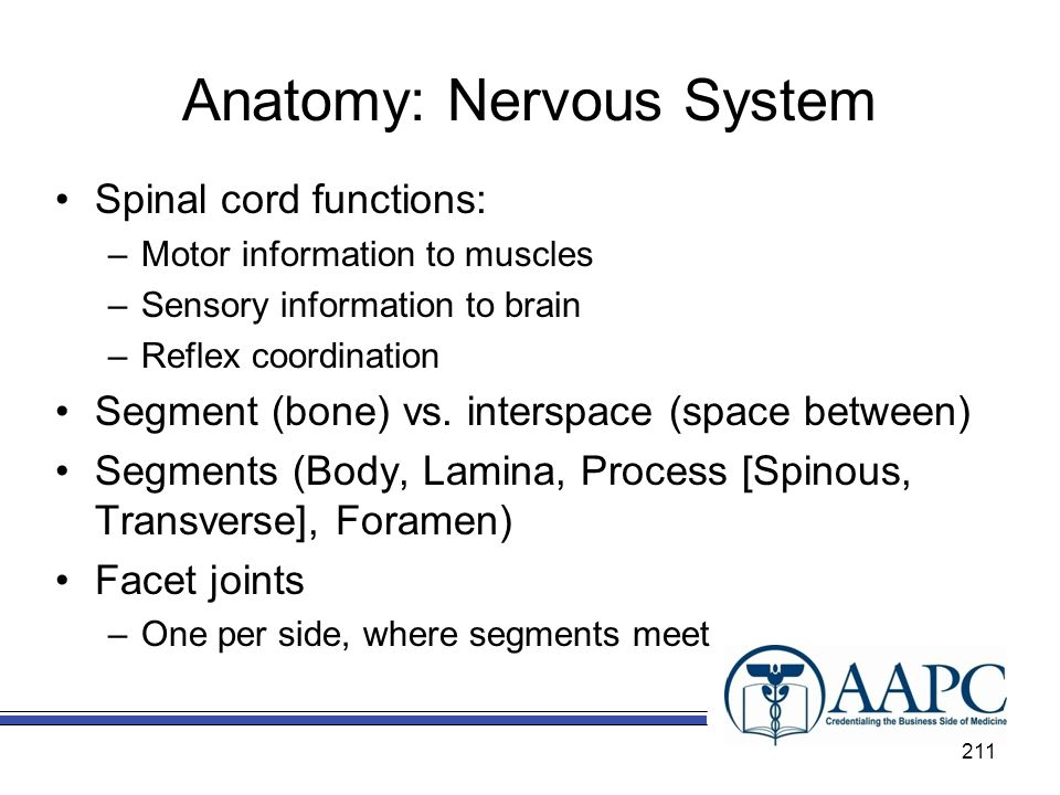 Anatomy: Nervous System