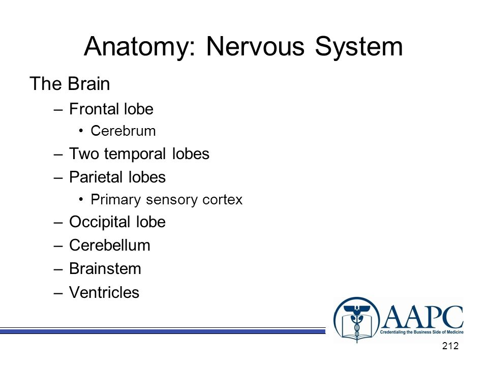 Anatomy: Nervous System