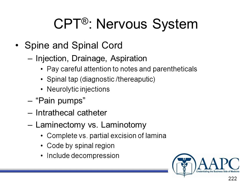 CPT®: Nervous System Spine and Spinal Cord