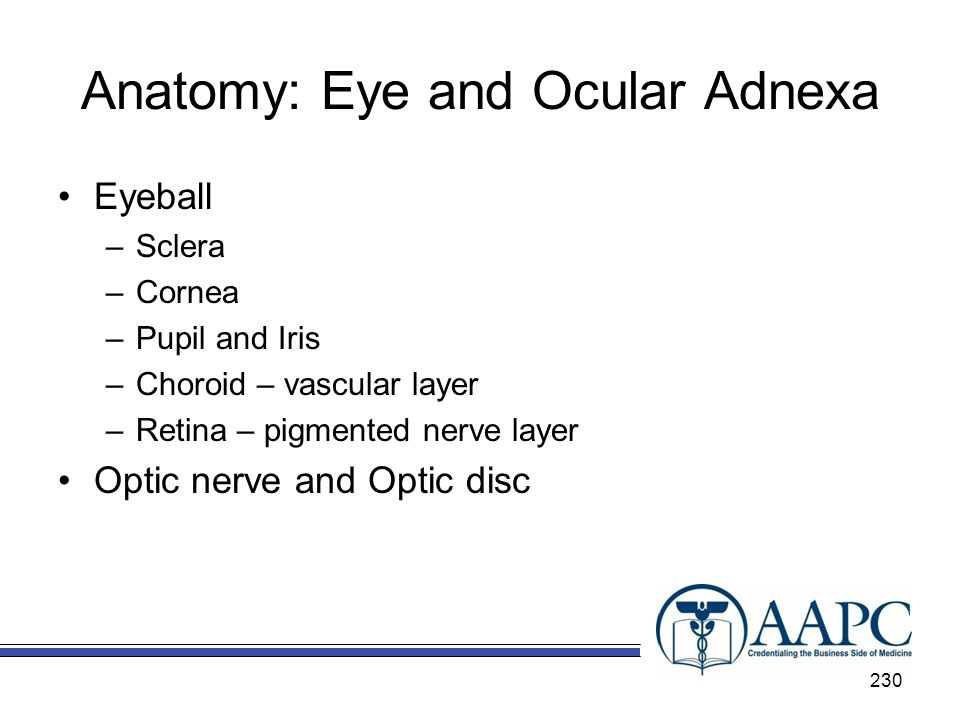 Anatomy: Eye and Ocular Adnexa