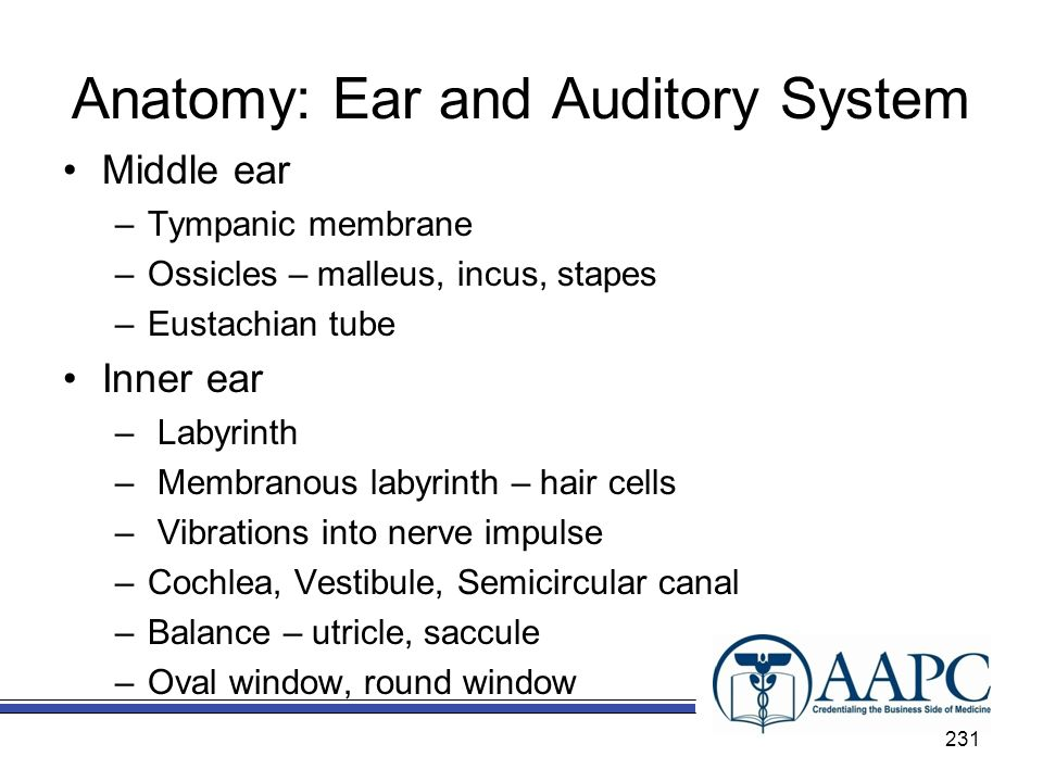 Anatomy: Ear and Auditory System