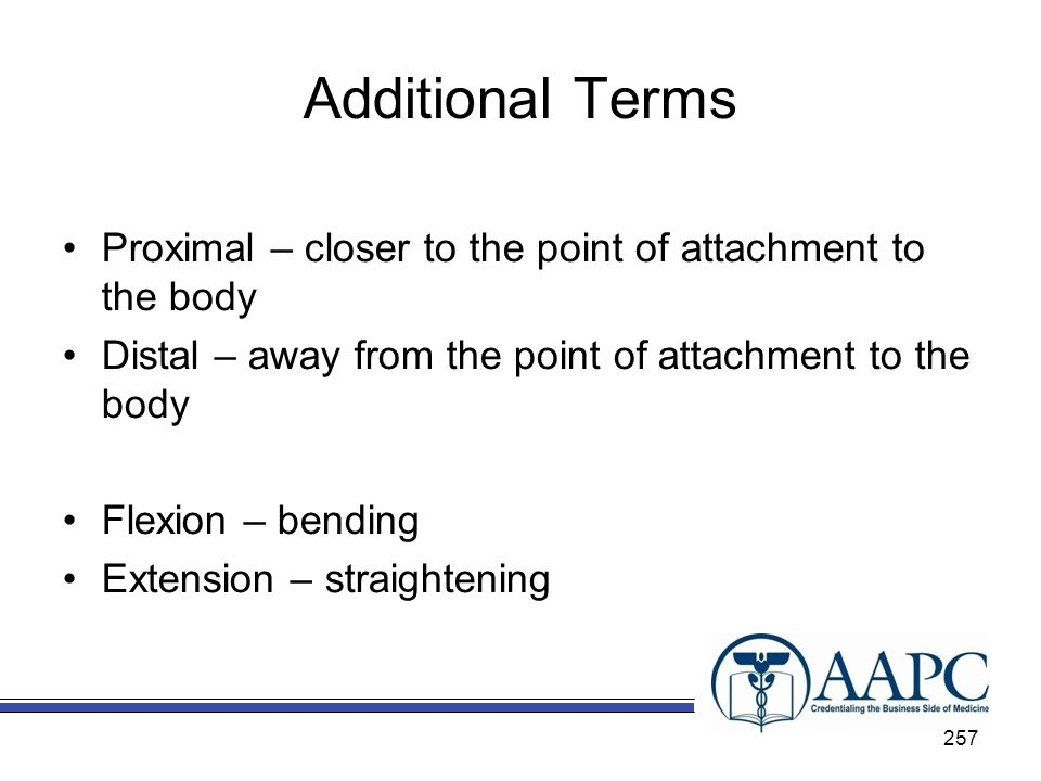 Additional Terms Proximal – closer to the point of attachment to the body. Distal – away from the point of attachment to the body.
