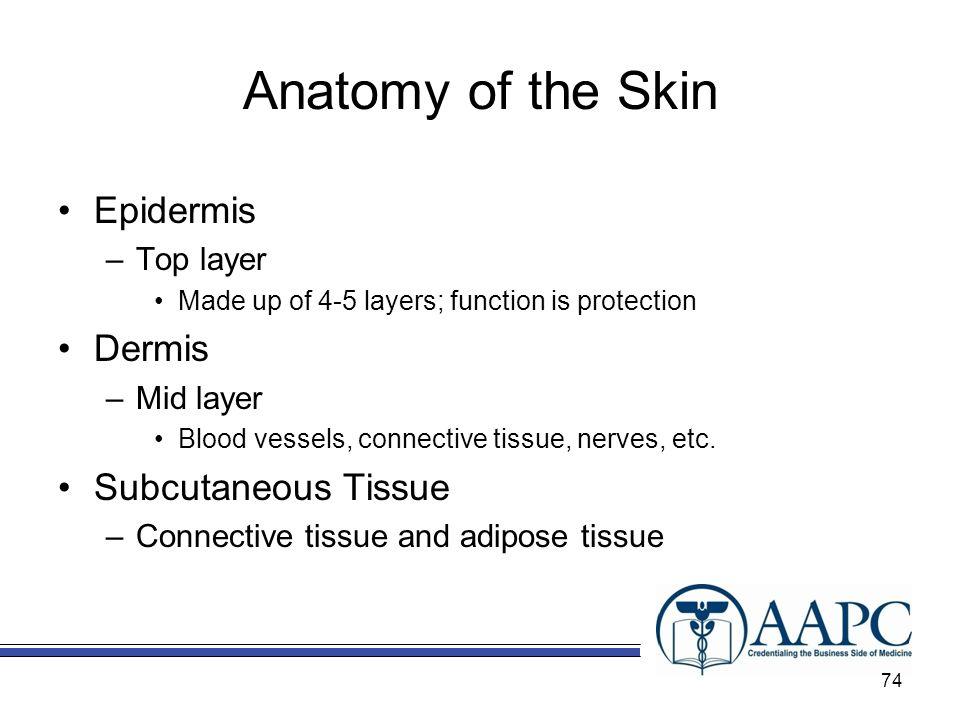 Anatomy of the Skin Epidermis Dermis Subcutaneous Tissue Top layer