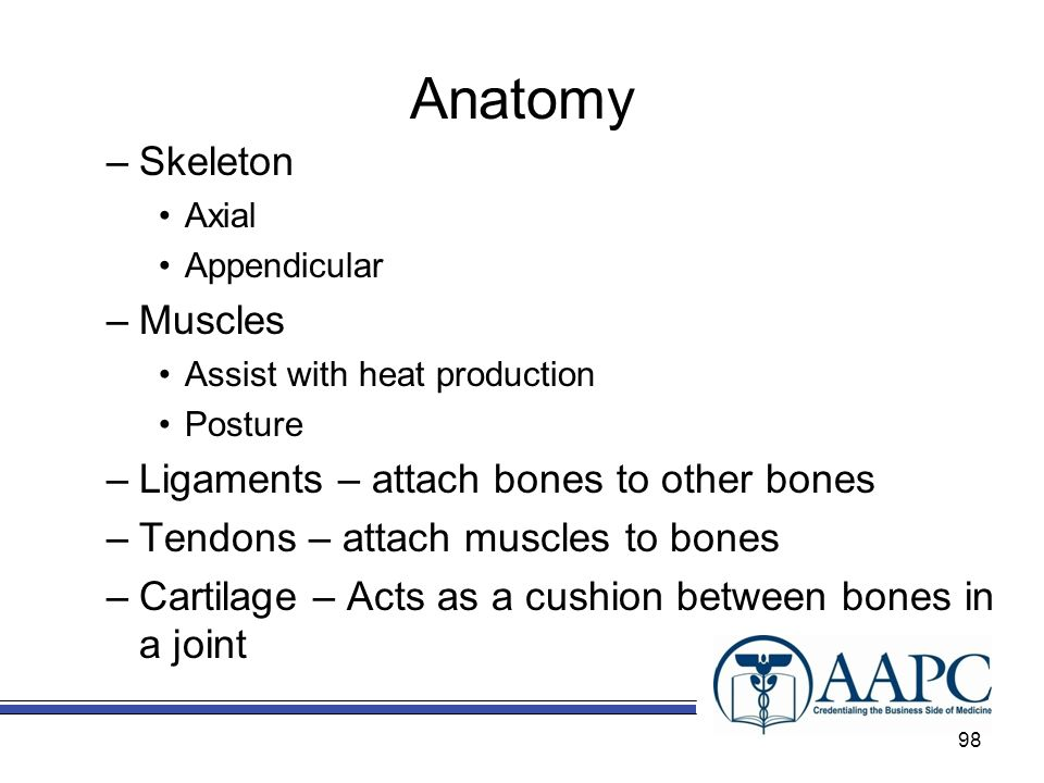 Anatomy Skeleton Muscles Ligaments – attach bones to other bones