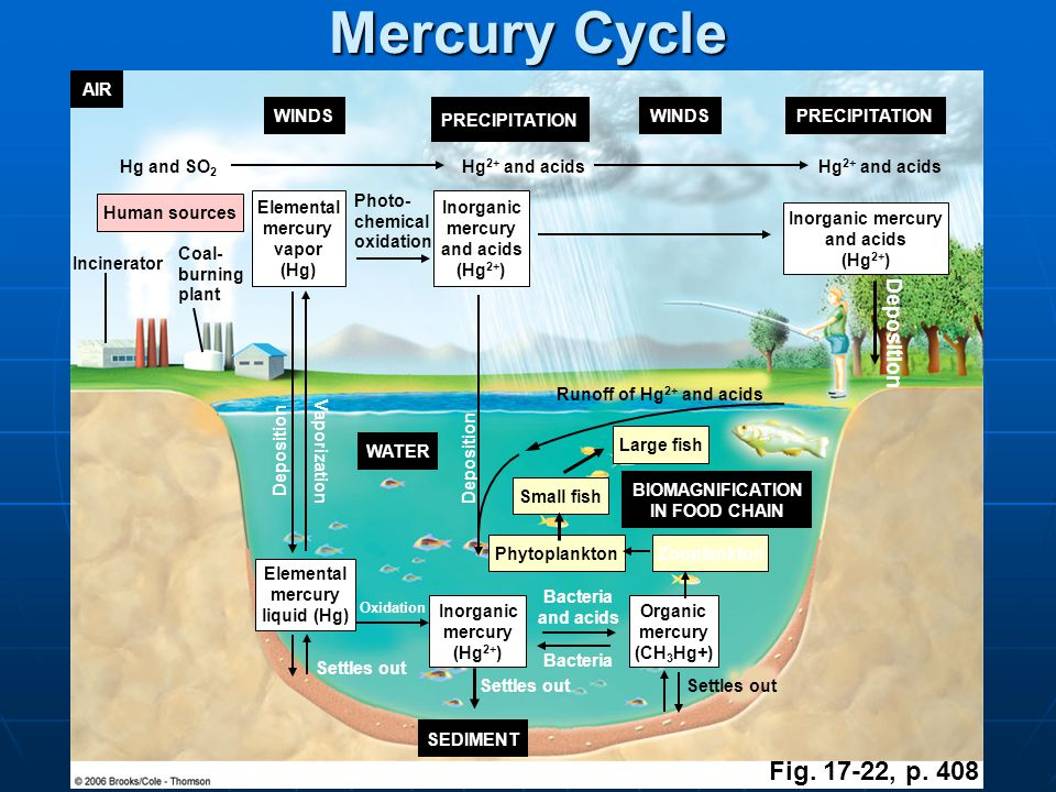 Mercury Cycle Fig. 17-22, p. 408 Deposition AIR WINDS PRECIPITATION