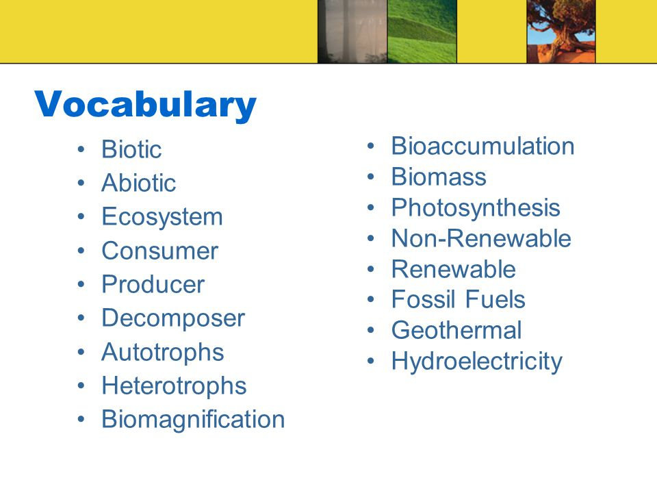 Vocabulary Biotic Abiotic Ecosystem Consumer Producer Decomposer