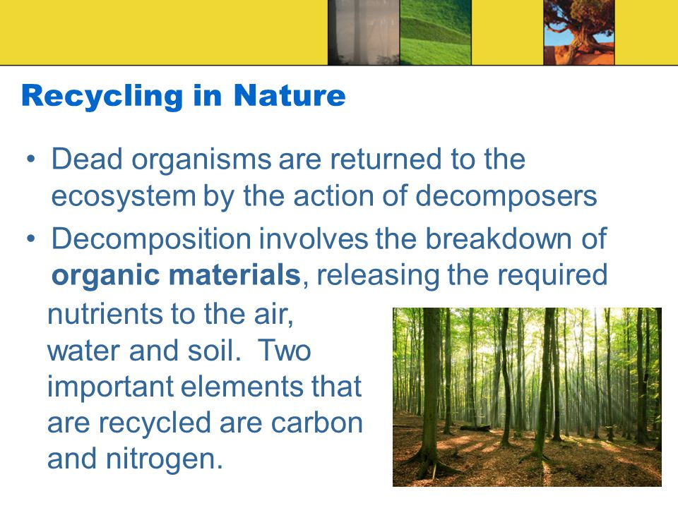 Recycling in Nature Dead organisms are returned to the ecosystem by the action of decomposers.