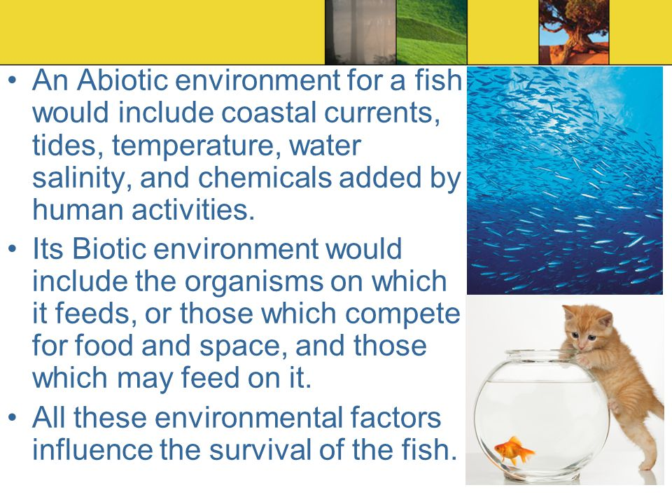 An Abiotic environment for a fish would include coastal currents, tides, temperature, water salinity, and chemicals added by human activities.