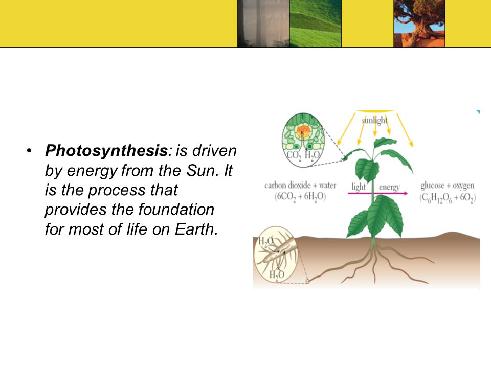 Photosynthesis: is driven by energy from the Sun