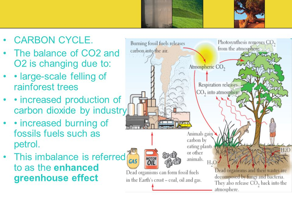 CARBON CYCLE. The balance of CO2 and O2 is changing due to: • large-scale felling of rainforest trees.
