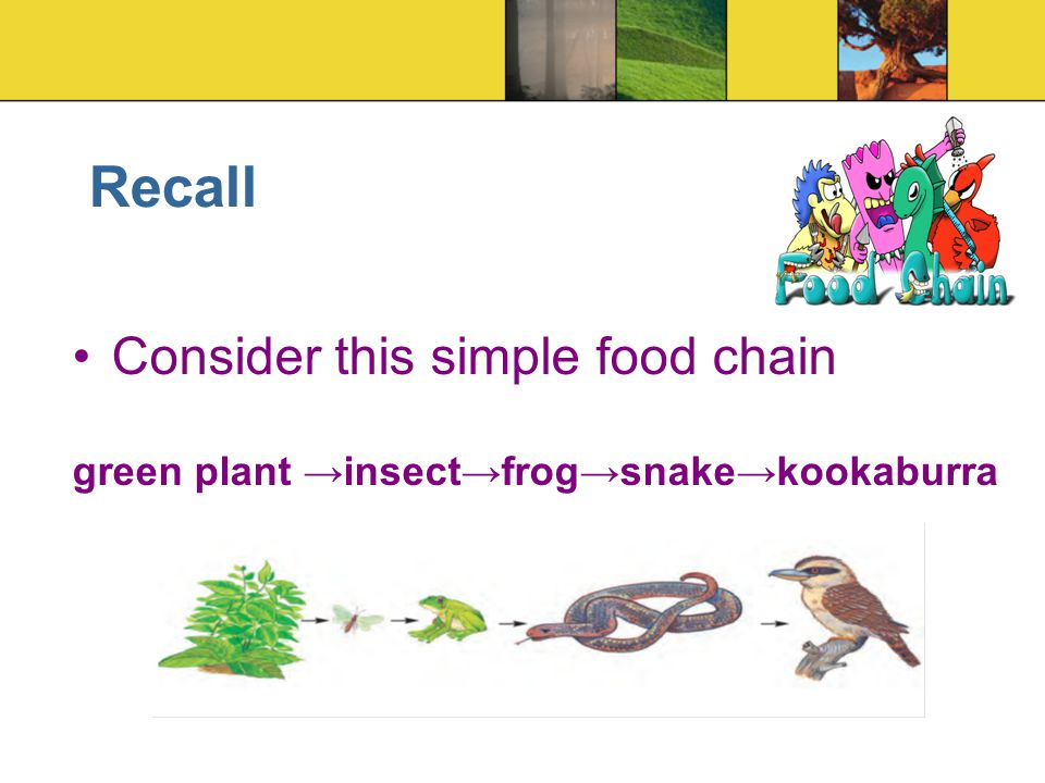 Recall Consider this simple food chain