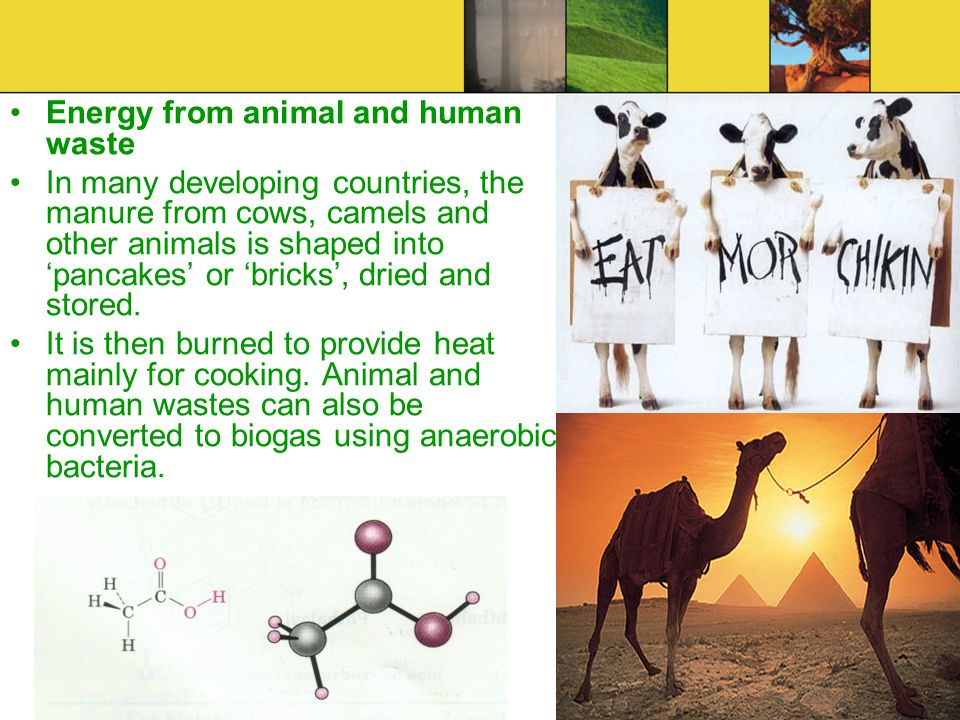 Energy from animal and human waste