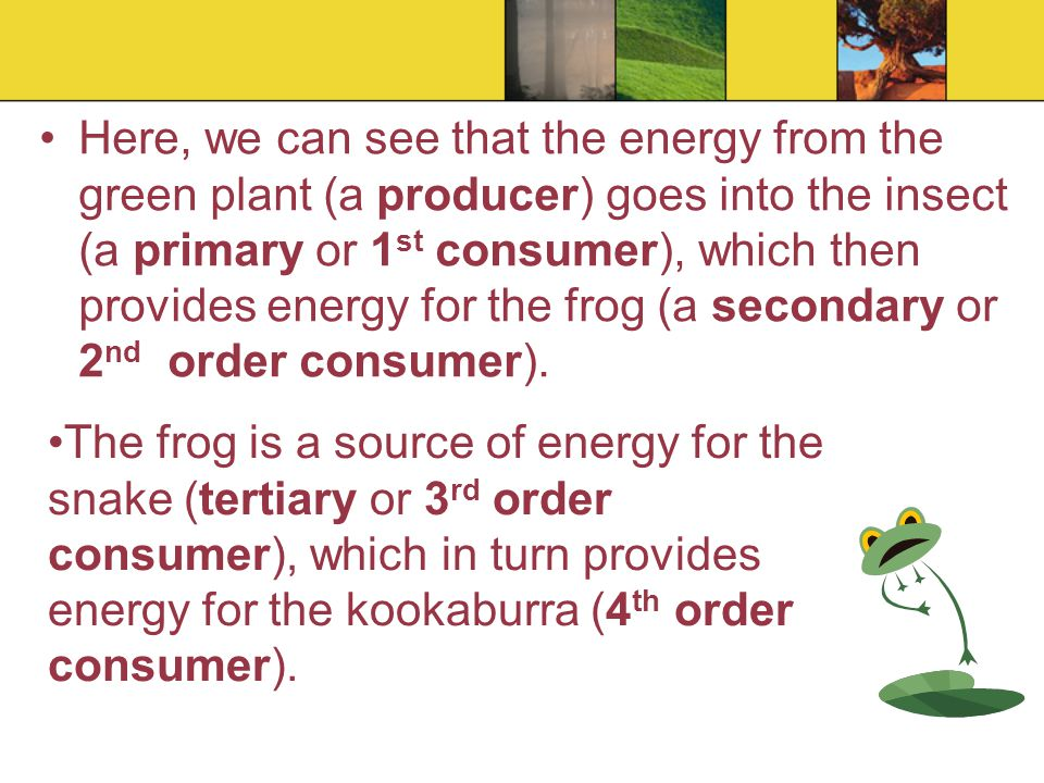 Here, we can see that the energy from the green plant (a producer) goes into the insect (a primary or 1st consumer), which then provides energy for the frog (a secondary or 2nd order consumer).