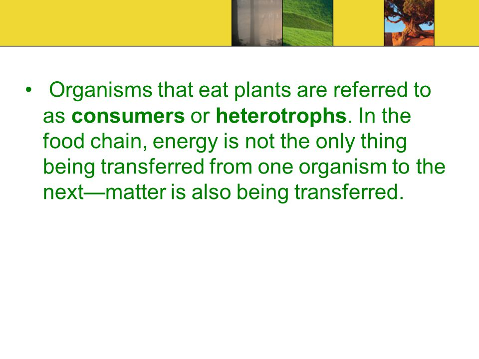 Organisms that eat plants are referred to as consumers or heterotrophs