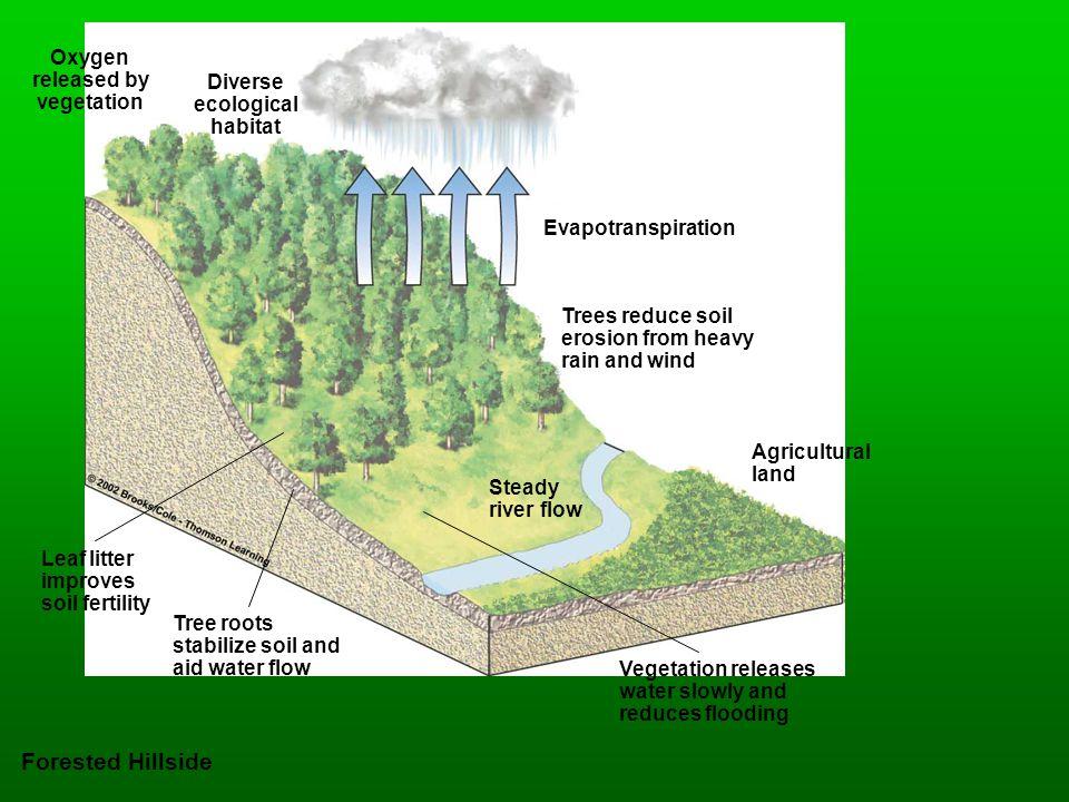 Forested Hillside Oxygen released by vegetation Diverse ecological