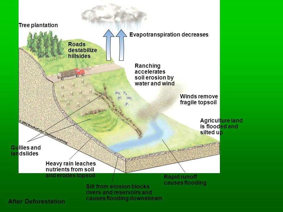 Evapotranspiration decreases