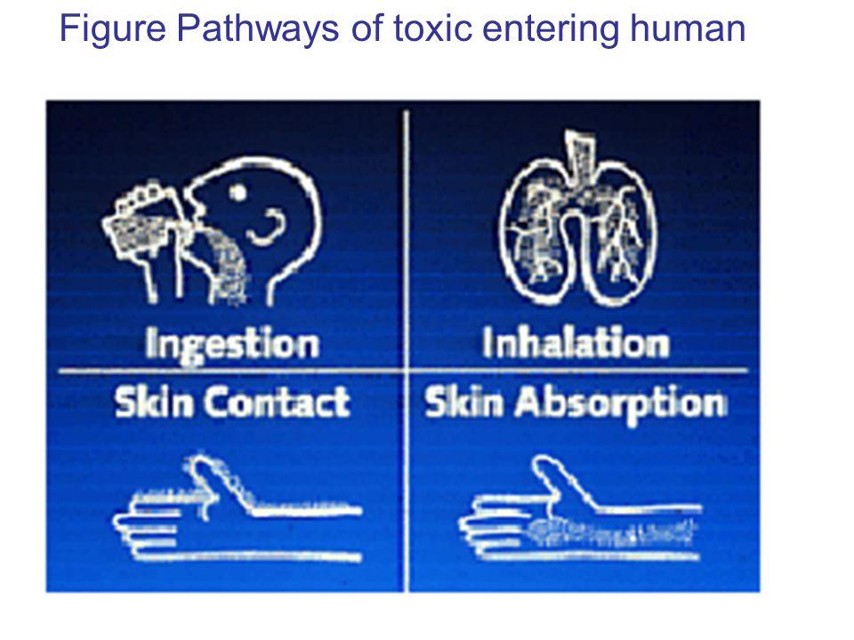 Figure Pathways of toxic entering human